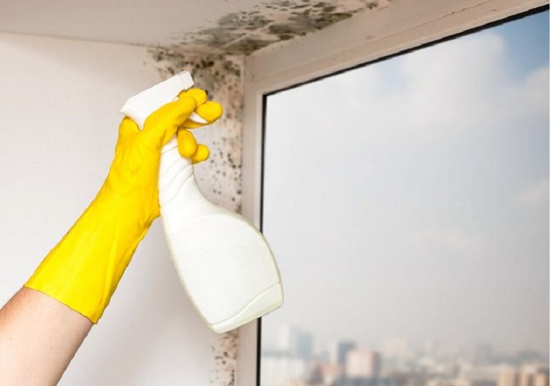 Как избавиться от грибка и плесени на окнах